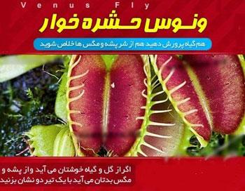 فروش اینترنتی گیاه حشره خوار یا گیاه مگس خوار یا گیاه گوشت خوار