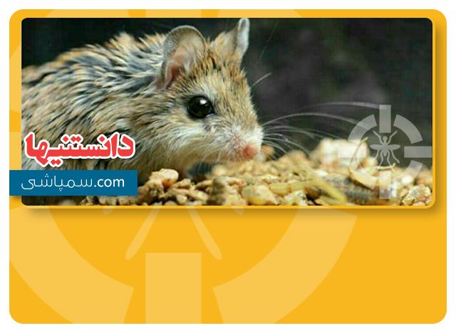 موش عقرب خوار