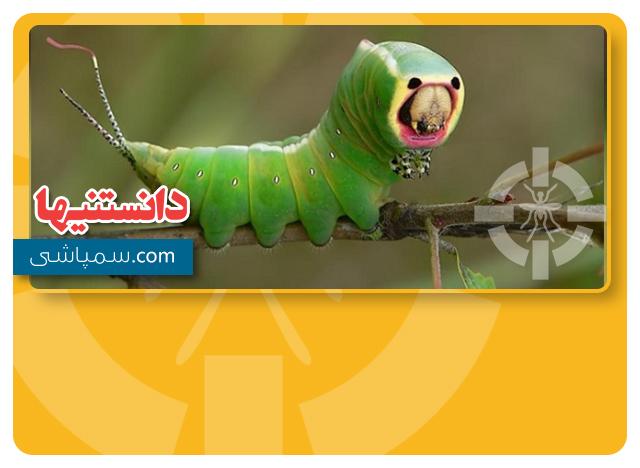 حشرات عجیب
