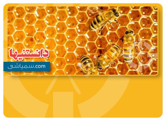 زنبور های عسل